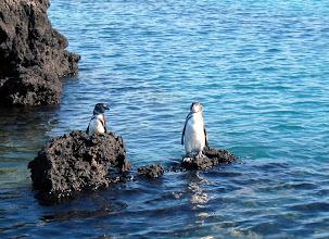 Photo: Lisää pingviinejä