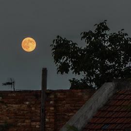 The moonlight!  by AbouLatif Ehab - City,  Street & Park  Night
