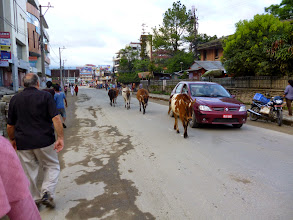 Photo: Cows rule the street in Kathmandu. This be Hindu culture. You kill a cow and it is life in prison.