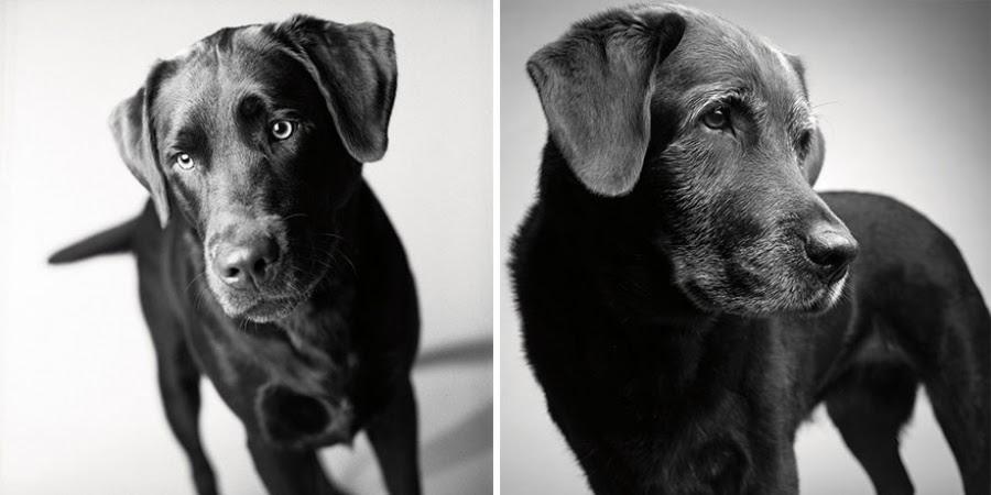 kQcPvds39r0UU8jBXSIkE1fVkz6LEWx1IXlorywrW9A=w900 h450 no - Как стареют собаки? Любопытный и трогательный фотопроект.