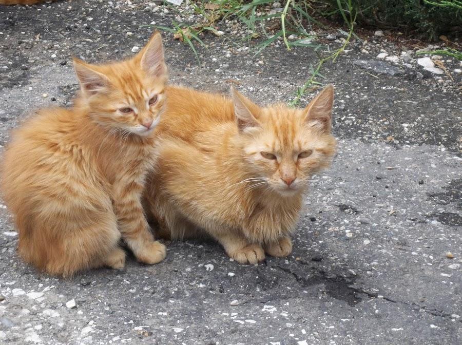 Котки by Georgi Kolev - Animals - Cats Kittens ( котки., треви., ден., светлина., цветове. )
