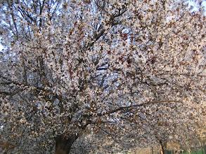 Photo: Primavera 2006