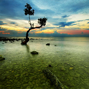 Elegance of Nature by Jhim Abucayon - Landscapes Waterscapes ( water, mangroove, sea, seascape, sunrise )