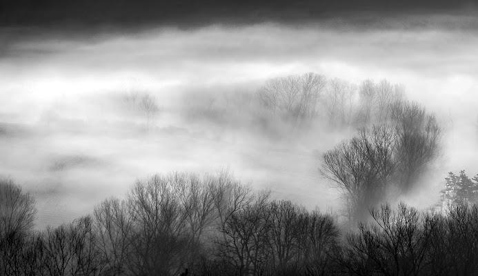 Nebbia fra gli alberi di Tacca