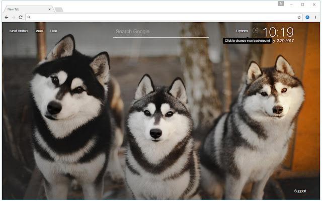 Husky Wallpaper Hd New Tab Huskies Themes