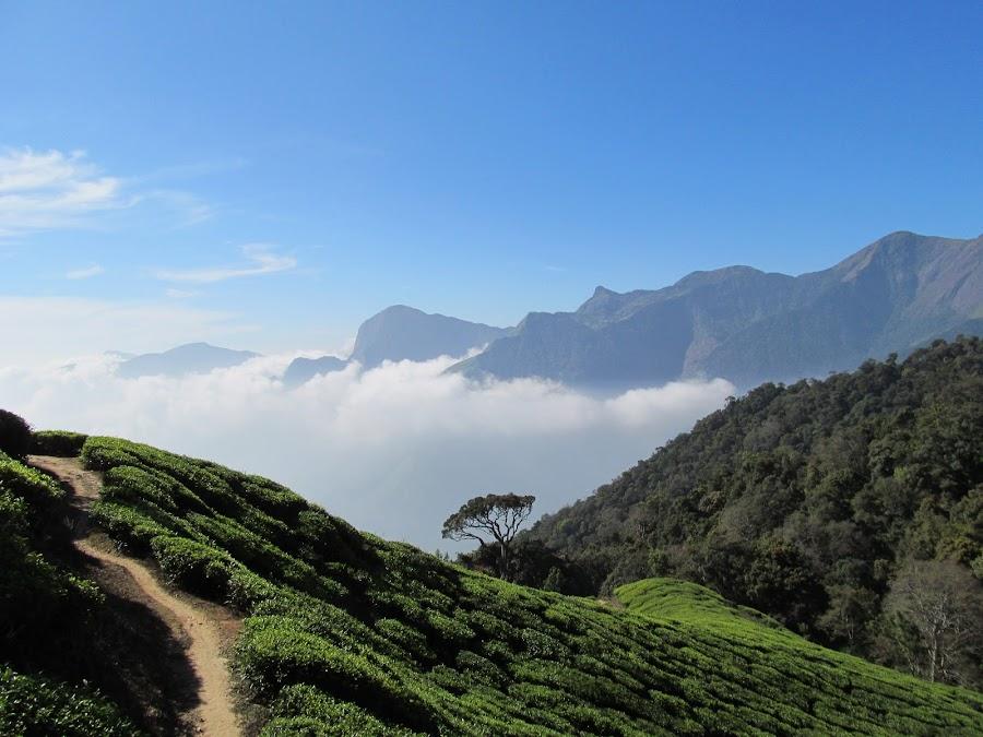 Munnar by Padmakumar KB - Landscapes Mountains & Hills