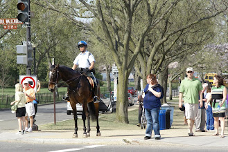 Photo: A park ranger on horseback waits at the crosswalk