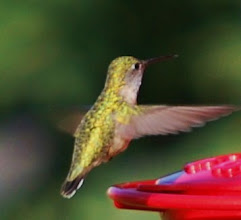 Photo: Hummingbird