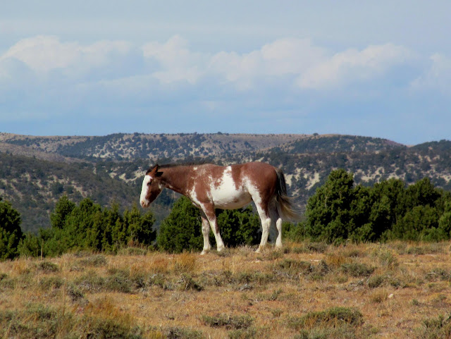 Wild horse at a landing strip between Dry and Cottonwood canyons