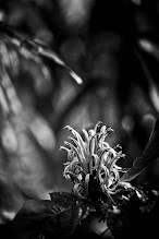Photo: just another day at the botanical gardens (actually yesterday, didn't make it that far today) #bwphotography  #floralphotography  #monochrome   #sohowmanytimescaniusethesamecaption  #beforpeoplestarttonotice