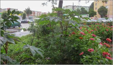 Photo: Turda - Str. Rapsodiei, Nr.3 - spatiu verde, ricin - 2018.07.07