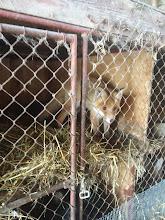 Photo: Baby fox at Kotrba