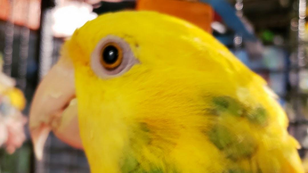 second chance bird & reptile rescue - Animal Rescue Service