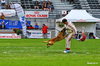 Photo: E'Red Bull du Banc des Hermelles