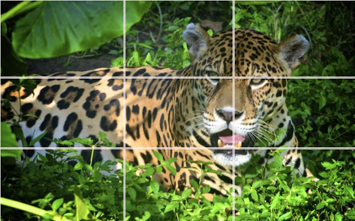 Puzzle - Forest animals screenshot 9