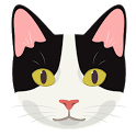 Black and White Cat: Information About Cat Meow icon