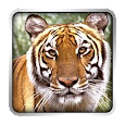 Voices Animals icon