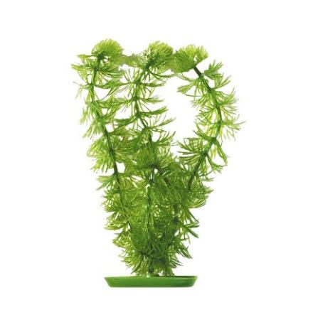 Hornwort 20cm plastväxt