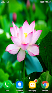 HD Lotus Flower Wallpaper - náhled
