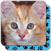 Puzzle Games free: Cute Cats