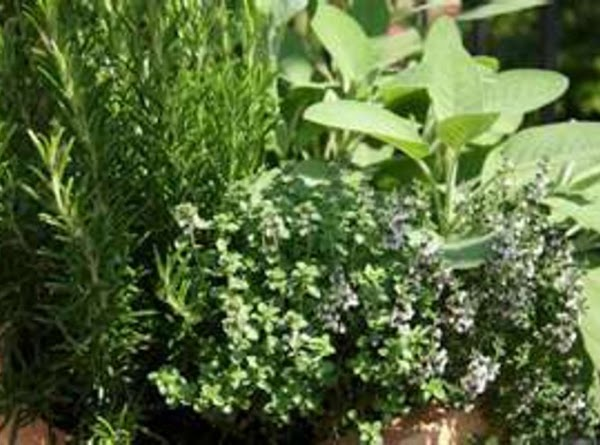 The Language Of Herbs Recipe