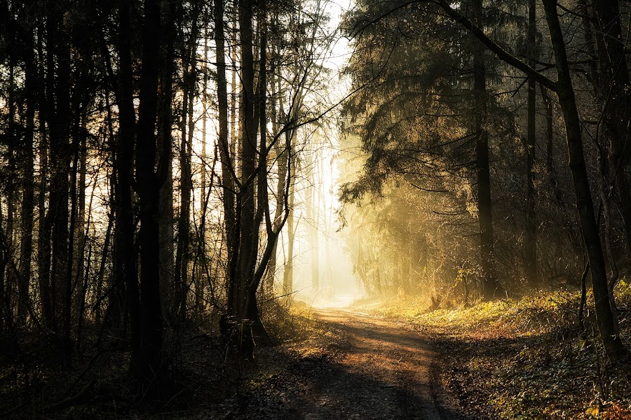 by Klemen Ramoves - Landscapes Forests