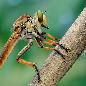 Alone by Joel  Pangoe Rihingan - Animals Insects & Spiders