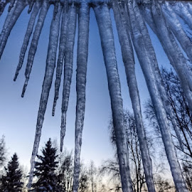 Icicles by Patricia Phillips - Nature Up Close Other Natural Objects ( alaska winter icicles )