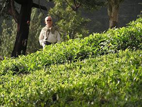 Photo: 7B220957 na plantacji herbaty