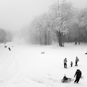 Christmas fun by Rob Jarvis - Landscapes Weather ( hill, snow, christmas, sledge, pwcbwlandscapes )