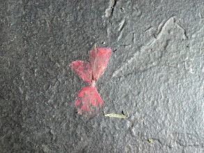 Photo: A butterfly flower, ground into the pavement.
