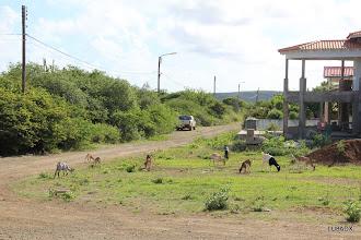 Photo: Cabritos en el frente de la casa
