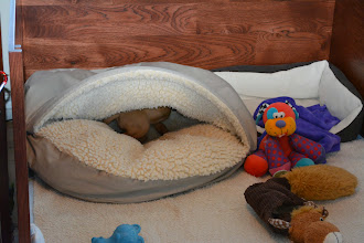 Photo: Oh oh looks who's discovered the cave bed