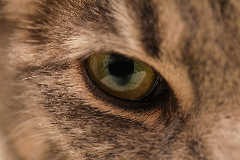 L'occhietto di Pallina di Eagle
