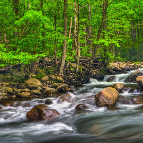Spring on the Little Pigeon River  by Jim Crotty - Landscapes Forests ( tennessee, stream, jim crotty, great smoky mountain national park )