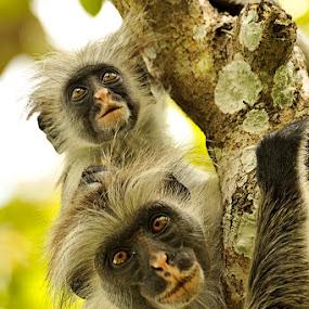 two of a kind by Anna Trandeva - Animals Other Mammals ( extinct, monkeys )