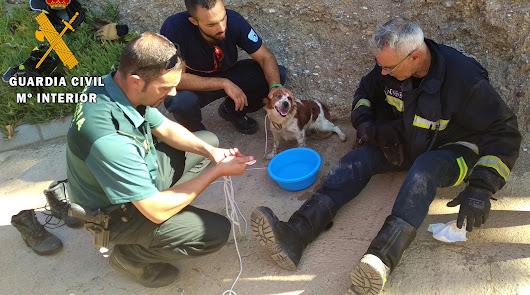 La Guardia Civil rescata a dos perros abandonados en una arqueta de evacuación