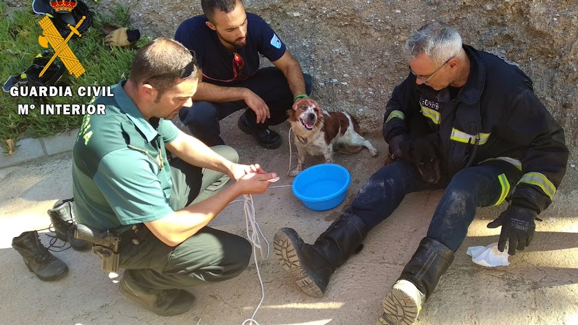 Tras el rescate, los animales se encuentran en perfecto estado de salud.