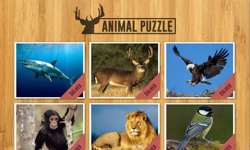 Amazing Animal Jigsaw