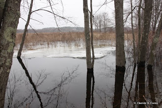 Photo: Spring flood, 3.10.11
