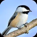 Chickadee Sounds icon