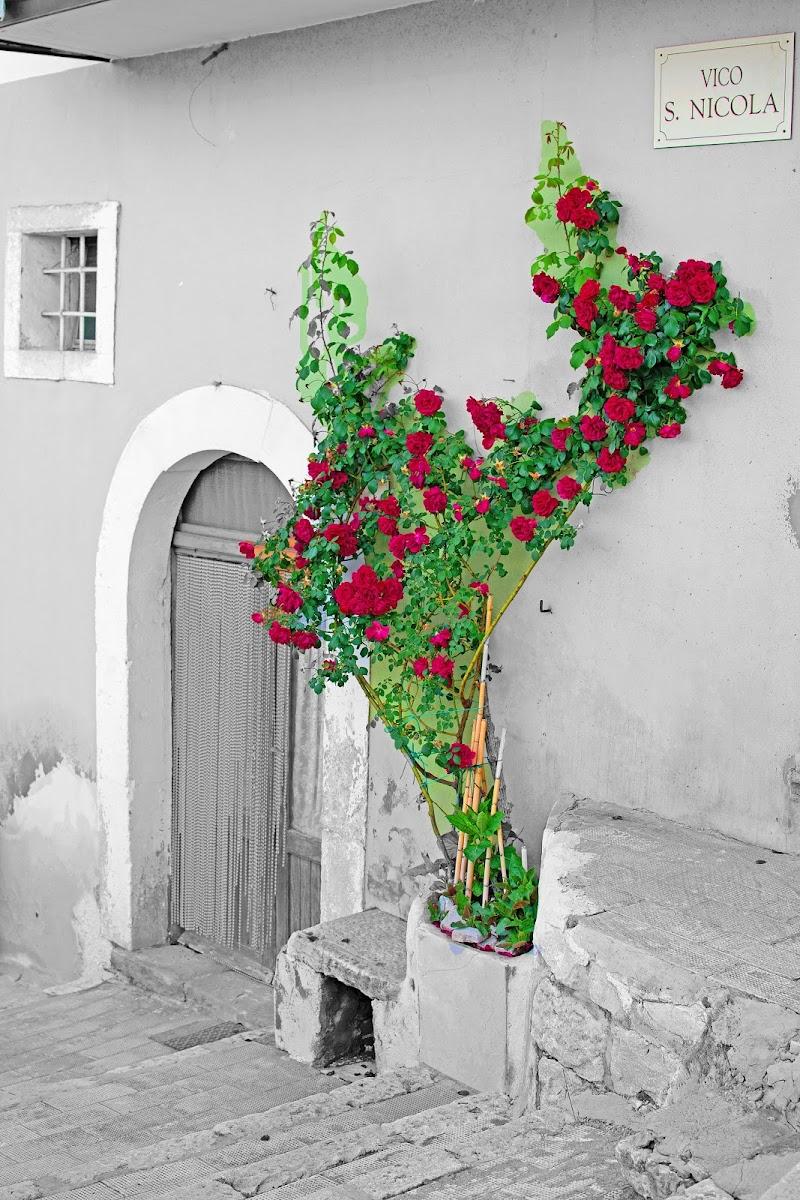 Rose Rosse per Te..! di antonello_de_rosa