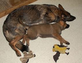 Photo: Qwinie og Luca 7 uker og 2 dager