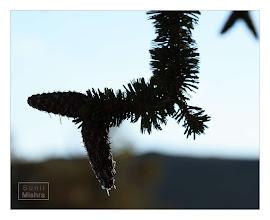 Photo: Eastern Sierras-20120715-259