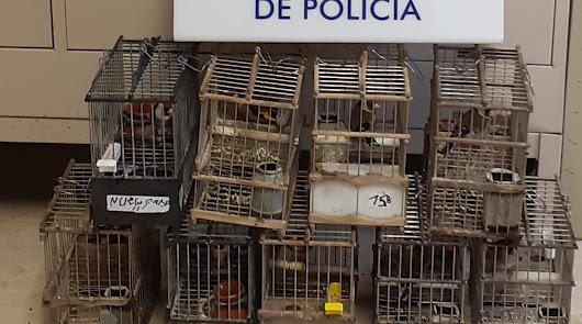 Recuperan nueve jilgueros de concurso y sus jaulas robados en El Alquián