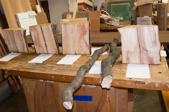 Photo: The Silent Auction has some nice pieces of box elder and some great limbs for making something curvy.