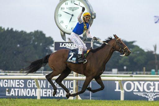 Tetaze, ganador del Latino, encabeza a los caballos sudamericanos con un rating de 120 en la última temporada