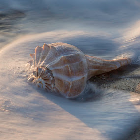 Shell in waves by Jack Nevitt - Uncategorized All Uncategorized