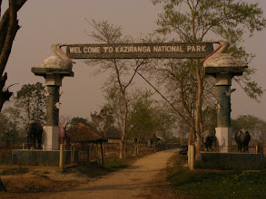 Photo: Kaziranga National Park