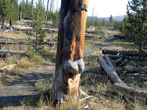 Photo: Strange tree...what do you see?
